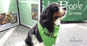 PAWS for People volunteer Wesley!