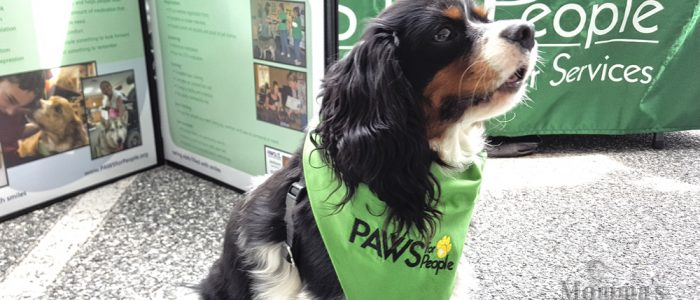 PAWS for People volunteer