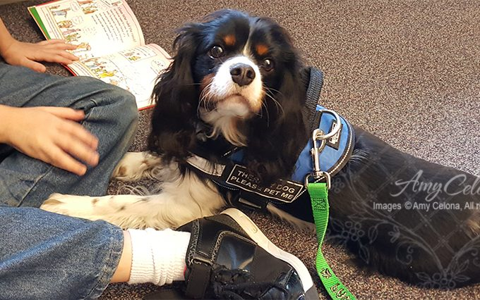 Wesley Therapy Dog @AGIS
