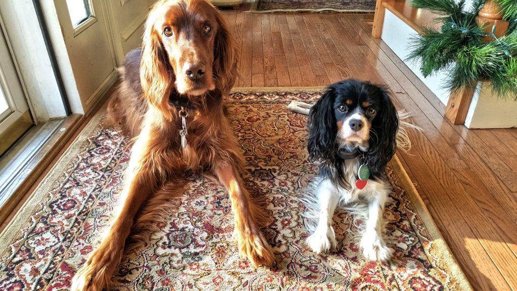 Riley & Wesley