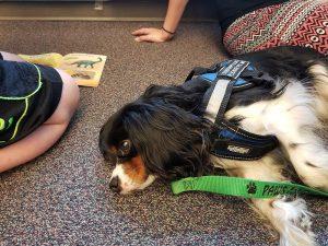 #WesleyTherapyDog at AG Intermediate School